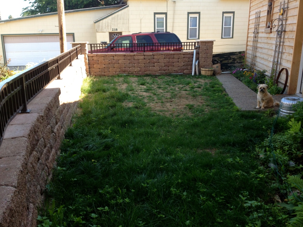 Our Dog Yard Before Picture