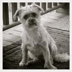 dog photo