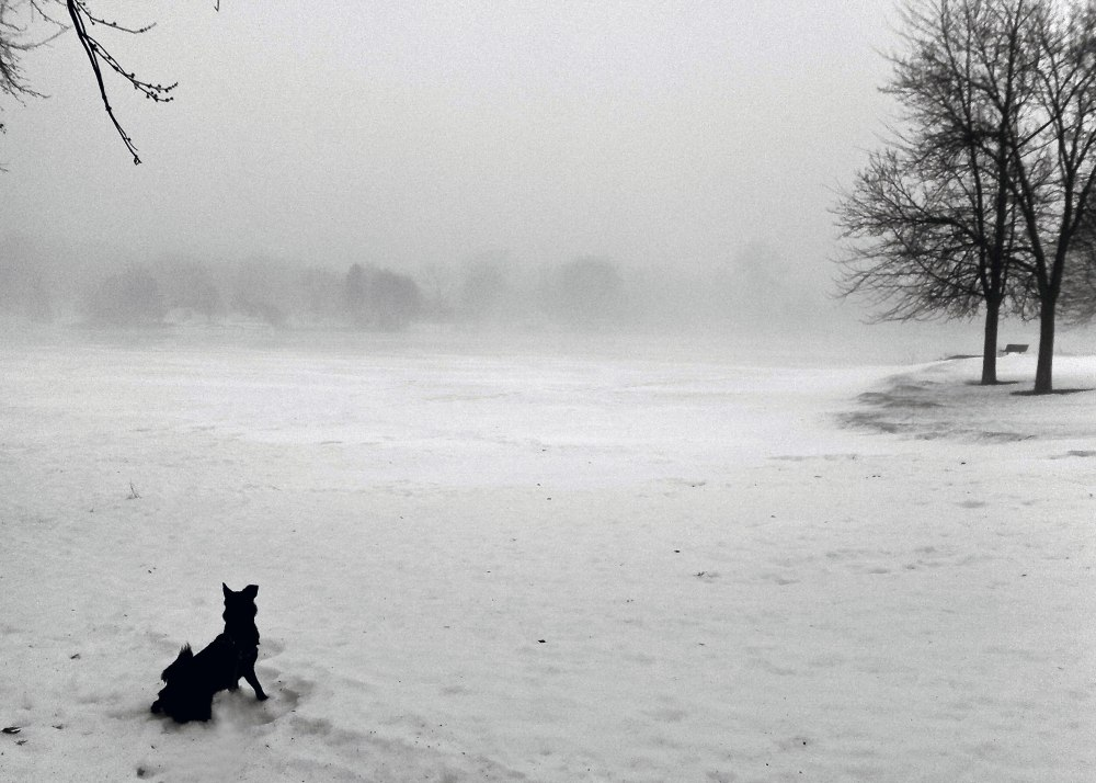 Black Dog Snow Storm