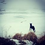 Minnesota Winter