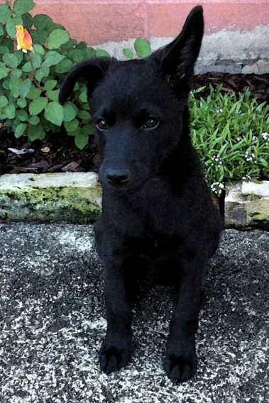 Puppy Jake
