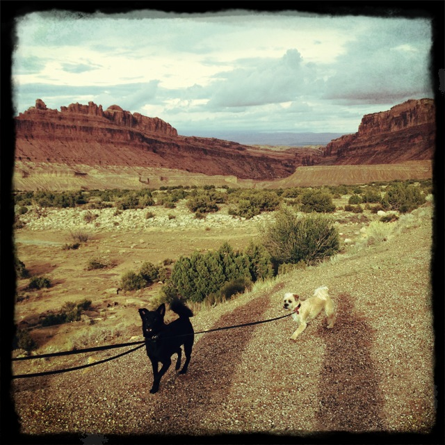 road dogs in green river, utah
