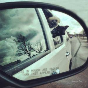 dogs-travel