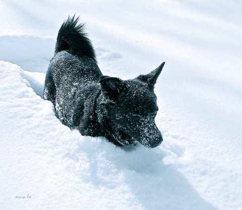 dogs-winter