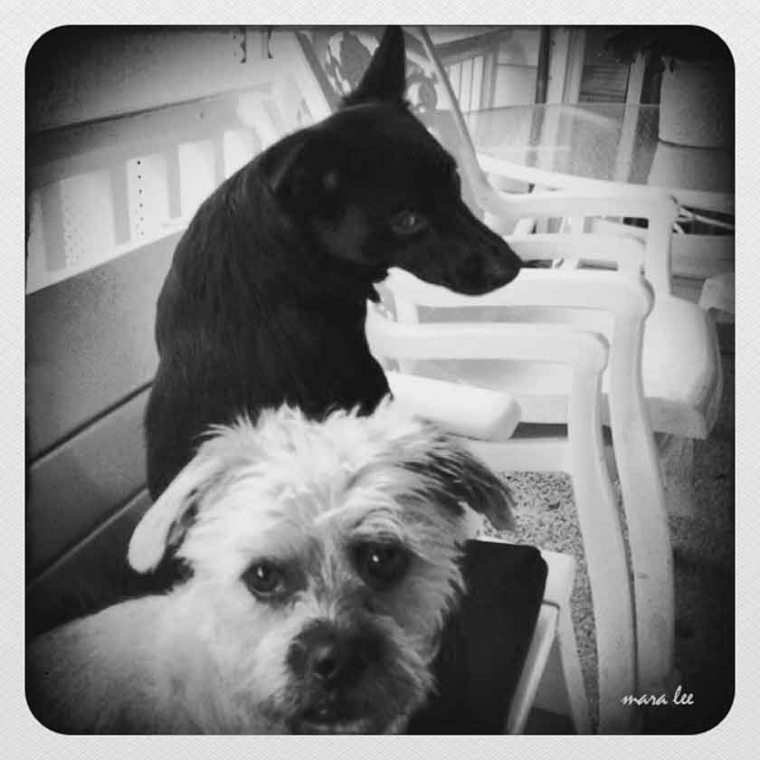 black-and-white-dogs