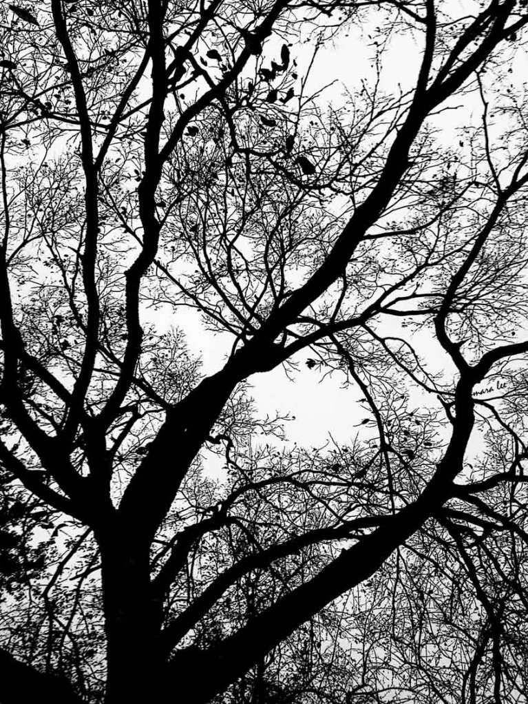 black-and-white-trees @ mara lee