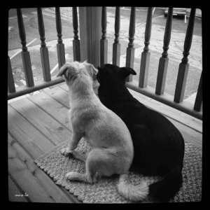 black-dog-white-dog