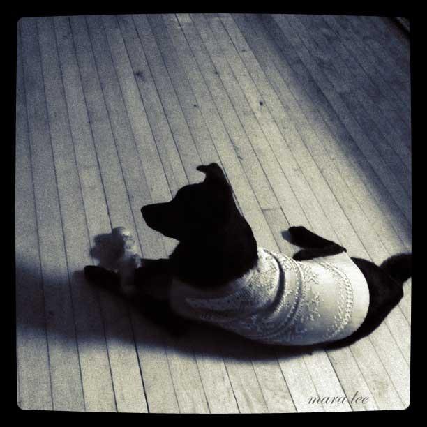black-dogs