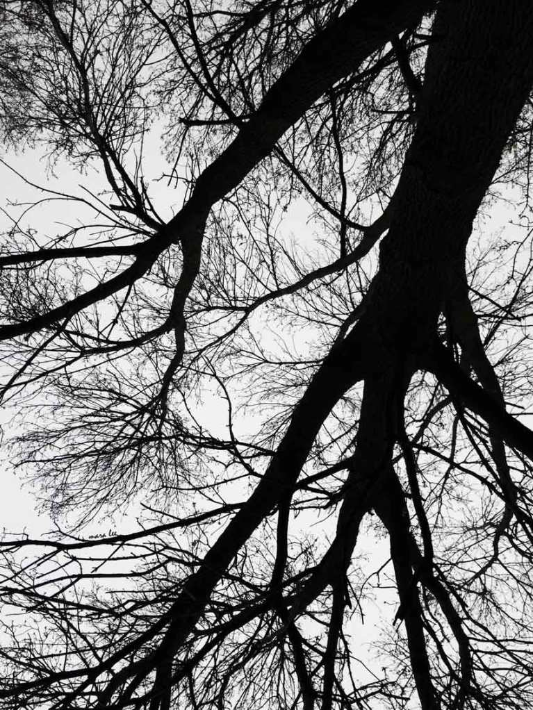 bare-trees © mara lee