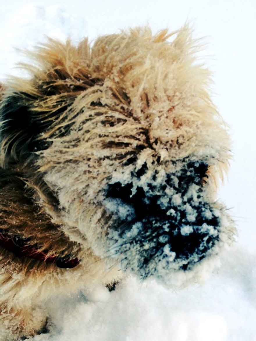 charlie-snow