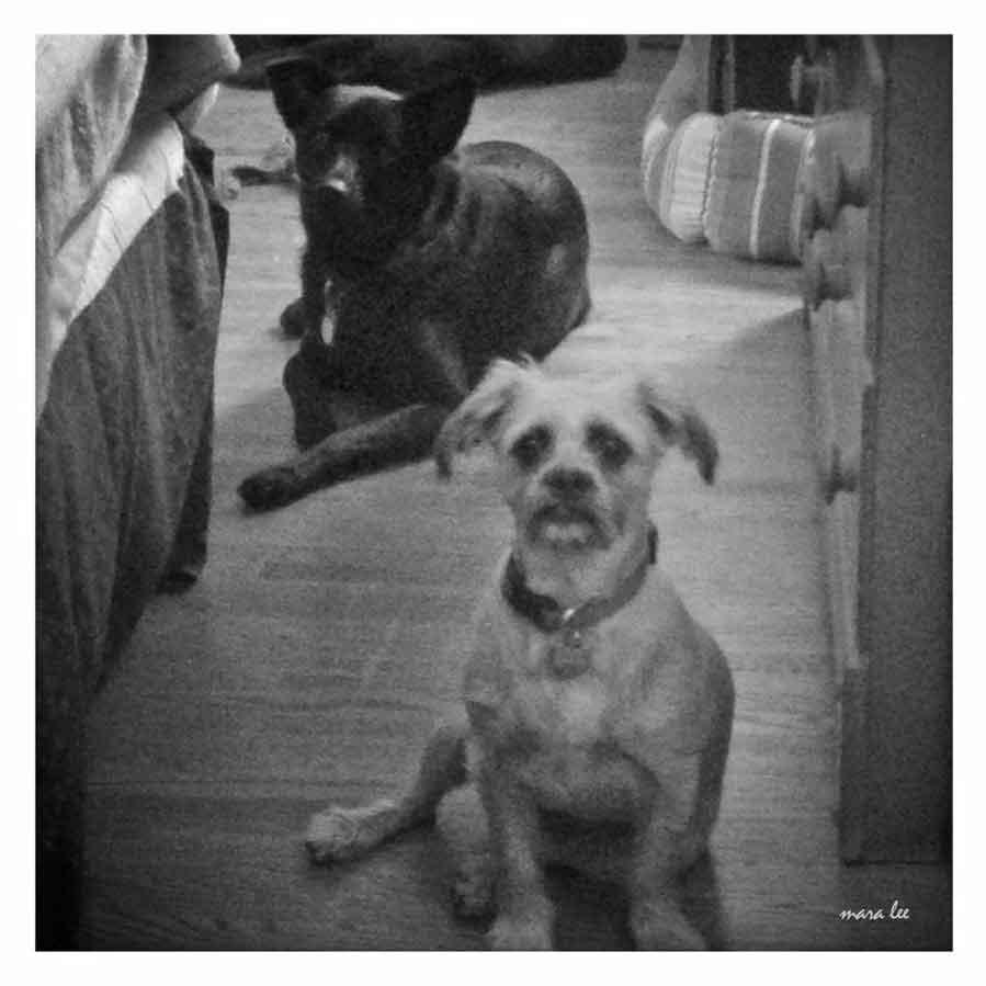 dog-looks