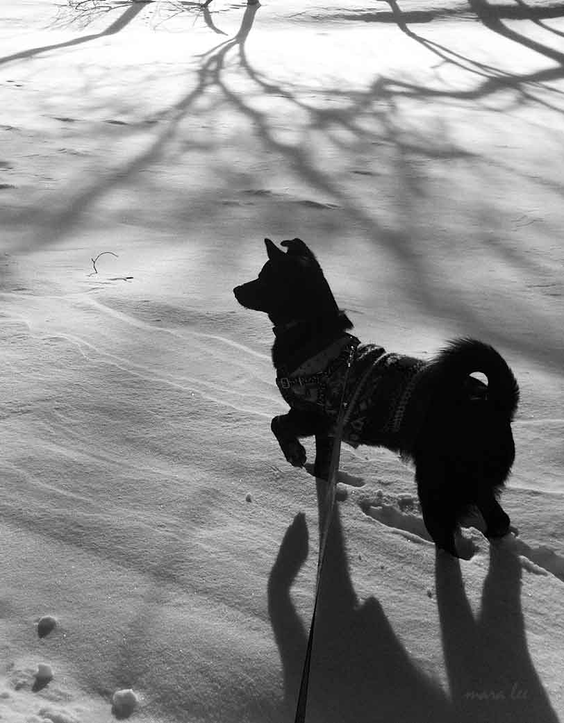 dog-shadows