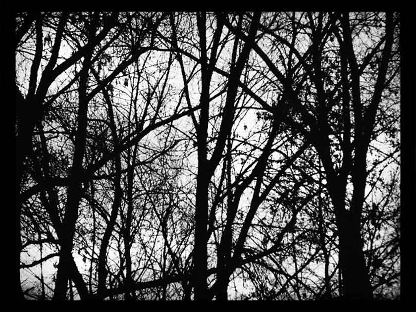 black and white trees © mara lee