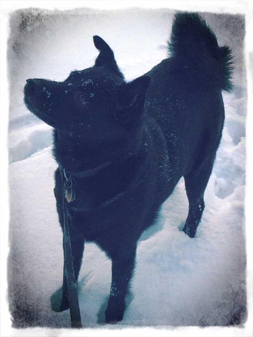 jake-snow