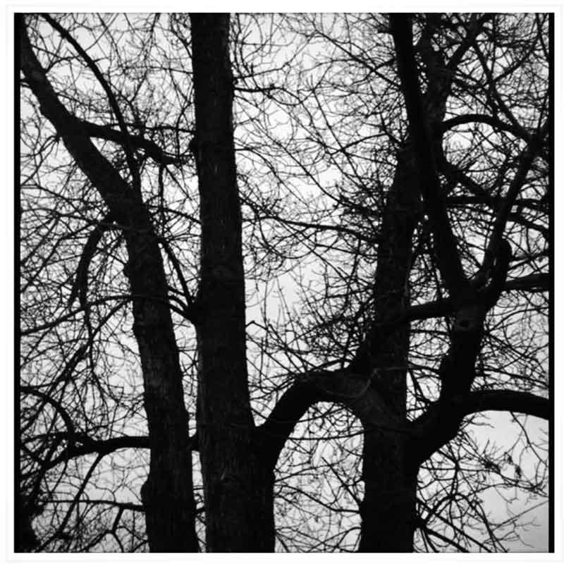 tree-abstract