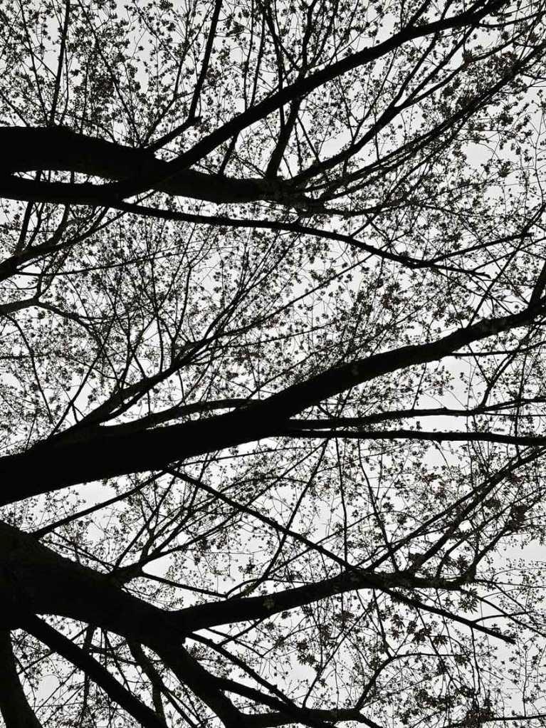 bare trees © mara lee