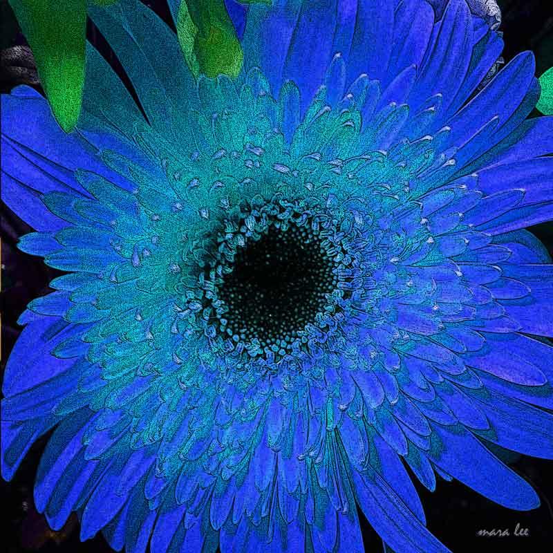 blue-flower-mod