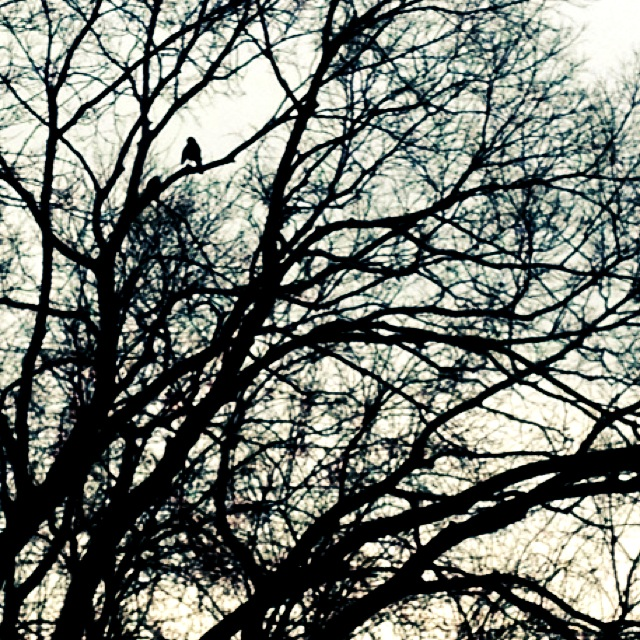 black and white bird in tree