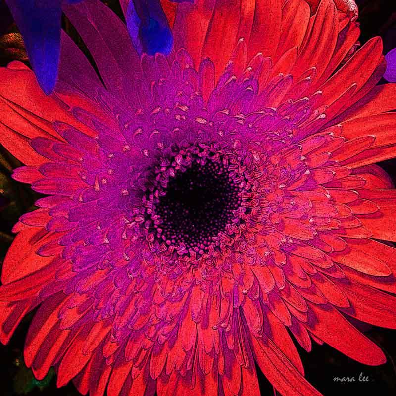 orange-purple-flowers