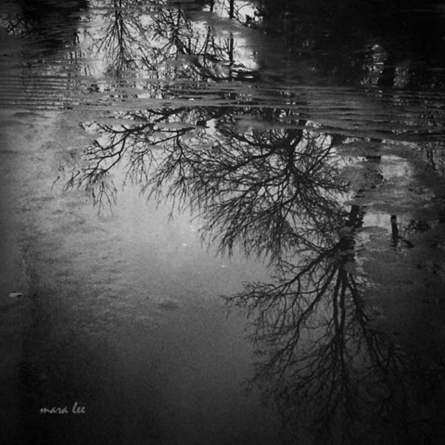 reflections-trees