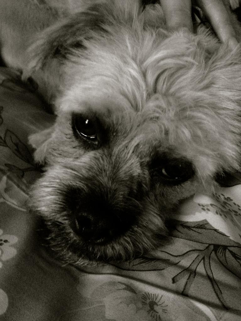 charlie-dog