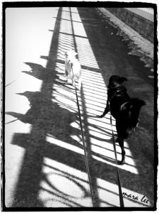 dog-shadows