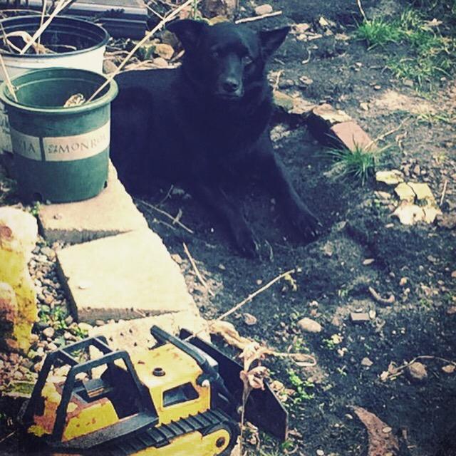 master hole digger © mara lee