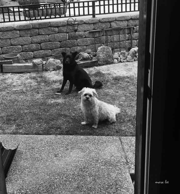 Jake and Charlie © mara lee