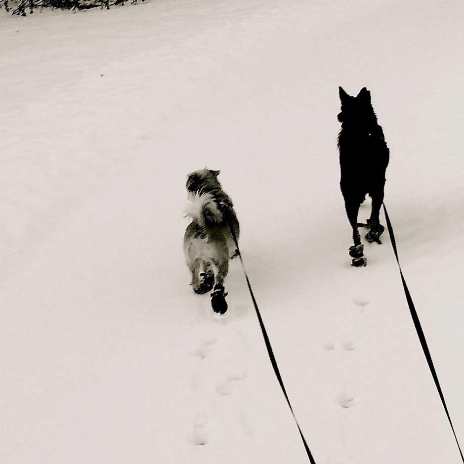 walking-dogs-1