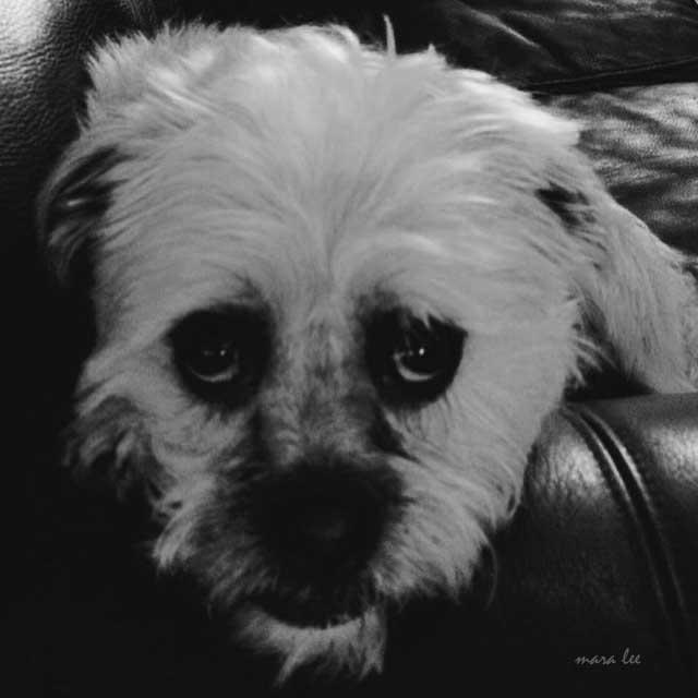 sad-dog-chaz