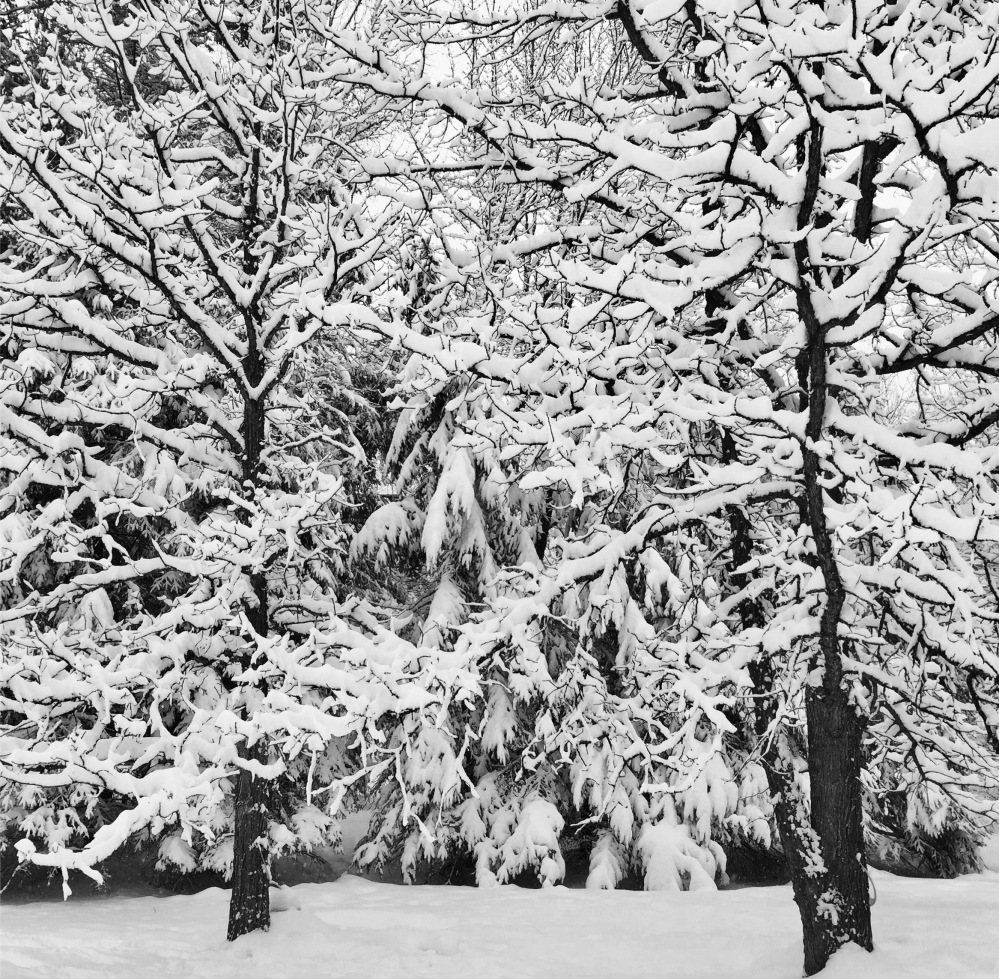 snow-trees-winter