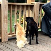 Dog Yard Design