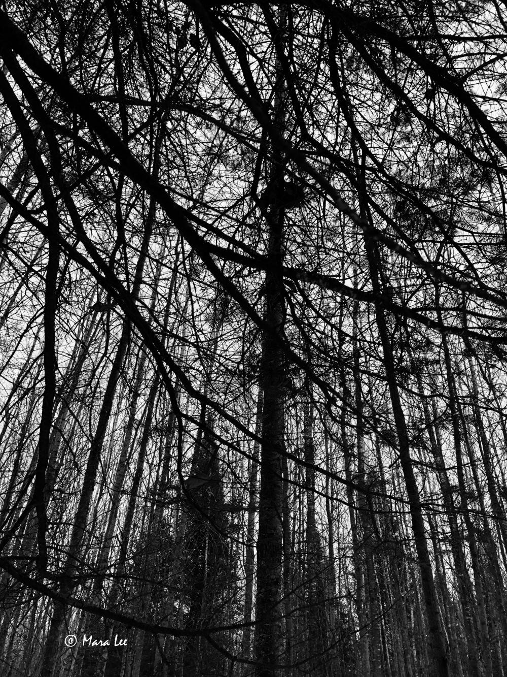 forest-life.jpg