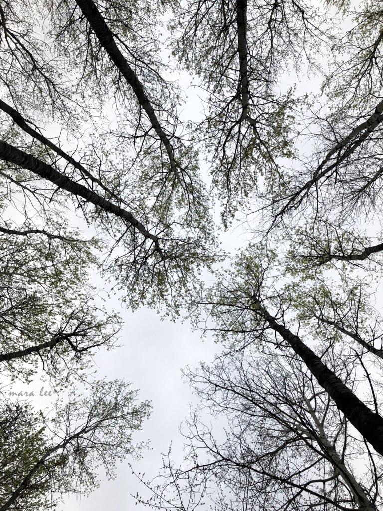 Forest Life © jakeandcharlie.com