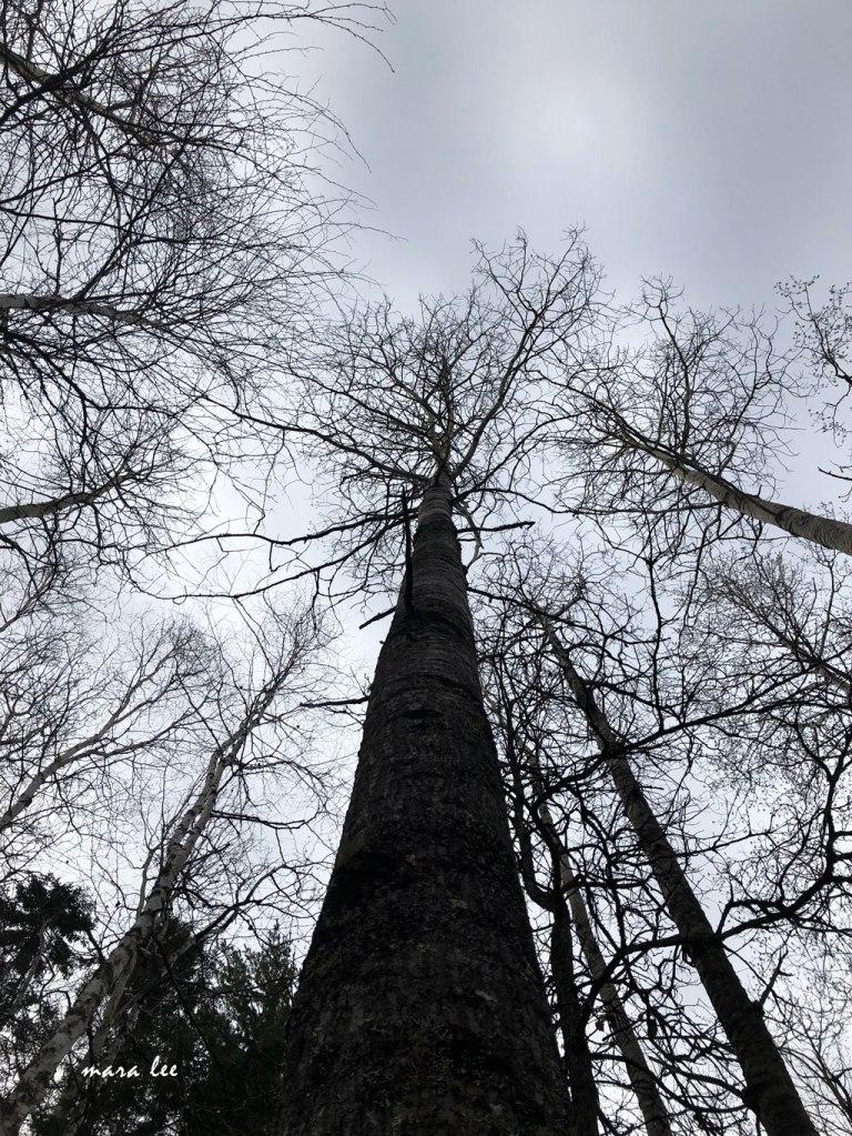 Forest Life jakeandcharlie.com
